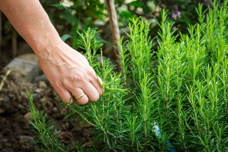 didsbury gardener
