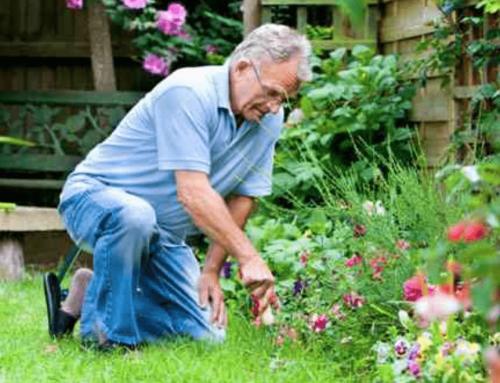 Gardening during Covid-19