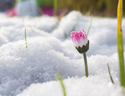 December Gardening Blog