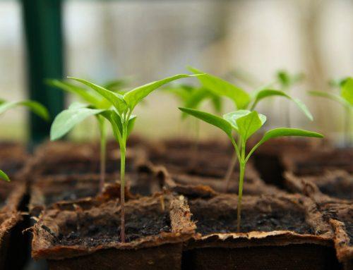 April 2021 Gardening Blog
