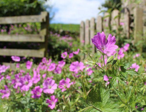 May 2021 Gardening Blog