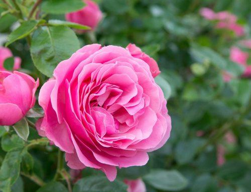 June 2021 Gardening Blog