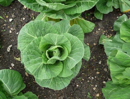 July Gardening Blog