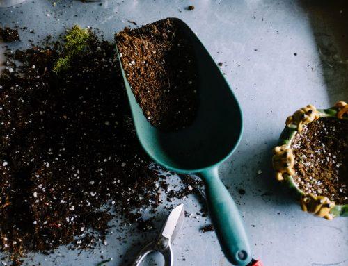 August 2021 Gardening Blog